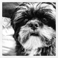 My baby, Stella