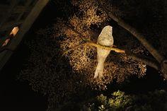 Beleuchtete Vögel, Genf