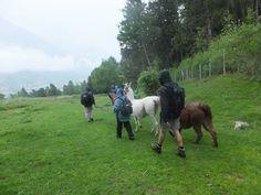 Spazieren über grüne Wiesen mit Lamas