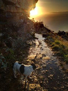 Spring evening sunset on Kloof Corner, Table Mountain, Cape Town. (Photo A. Evening Sunset, Corner Table, Table Mountain, Some Pictures, Cape Town, Hiking, African, World, Places