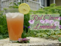 How To Make Red Clover Lemonade - Jill's Home Remedies