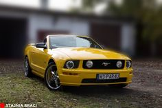Ford MUSTANG GT - rocznik 2005  Mustangiem do ślubu  #mustang #ford #fordmustang #caraudio #tuning #weddingcar Ford Mustang, Bmw, Cars, Vehicles, Ford Mustangs, Mustang Ford, Rolling Stock, Autos, Vehicle