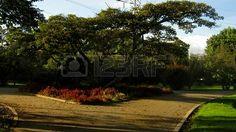 A lovely walking path surrounded by vegetation  Bogot� Botanical Garden