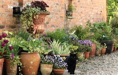 hamish posing with the pots and containers mid May 2013