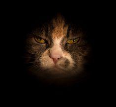 Photograph Mini eyes by Niklas Ericsson on 500px