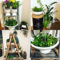 Ideias jardim dentro de casa