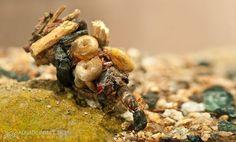 larva da Mariposa d'água -  arquitetos e engenheiros da natureza