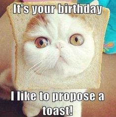 There is a huge community of cat lovers an for them there is nothing more hilarious and funnier than cat memes. This post is specially for those cat lovers to make their day. Here are 20 Funny Cat Memes birthday. Cat Birthday Memes, Funny Happy Birthday Meme, Funny Happy Birthday Pictures, Birthday Nails, Sister Birthday Quotes Funny, Birthday Ideas, Birthday Humorous, Birthday Parties, Birthday Sayings