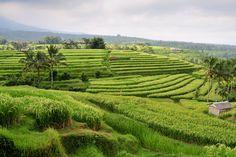 The Stunning Jatiluwih Rice Terraces