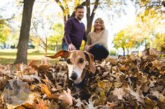 Wiener Dog Totally Photobombs Couple's Engagement Photos | Bored Panda