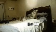 Hey Bill....!! This is too cute :)