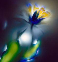 electrocuted flowers by robert buelteman Naumann Kirlian Photography, Uv Photography, Types Of Photography, Photography Series, Unusual Flowers, Beautiful Flowers, Fotografia Kirlian, Flower Images, Flower Art