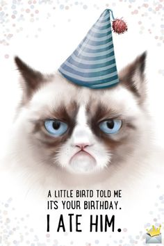 Funny Happy Birthday Images - Happy Birthday Funny - Funny Birthday meme - - A little bird told me it's your birthday. I ate him. The post Funny Happy Birthday Images appeared first on Gag Dad. Funny Happy Birthday Images, Happy Birthday Best Friend, Happy Birthday For Him, Happy Birthday Photos, Birthday Wishes Funny, Happy Birthday Messages, Happy Birthday Greetings, Cat Happy Birthday Meme, Special Happy Birthday Wishes