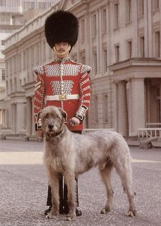 British Army uniform is 1 Btn Scots Guards so it's probably a Deer Hound :)