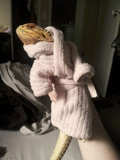 Sophie has snapped Pringle lounging around in his pretty pastel pink dressing gown...