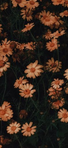 10801920 Chamomile flowers bloom as wallpaper 10801920 Chamomile flowers bloom as . - 10801920 chamomile flowers bloom as wallpaper 10801920 chamomile flowers bloom as wallpaper, # - Wallpaper Pastel, Sunflower Wallpaper, Iphone Background Wallpaper, Aesthetic Pastel Wallpaper, Aesthetic Backgrounds, Tumblr Wallpaper, Cellphone Wallpaper, Aesthetic Wallpapers, Wallpaper Wallpapers