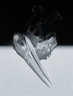 Dan Tobin Smith — Skulls