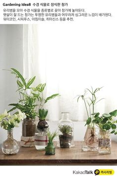 using a hydroponic system for growing plants