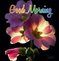 Good Morning Pictures 2018 In Hindi Punjabi English - Whatsapp Images Good Morning Beautiful Flowers, Good Morning Roses, Good Morning Images Flowers, Morning Pictures, Morning Pics, Thursday Morning, Happy Thursday, Happy Weekend, Good Morning Dear Friend