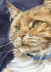 Aquarel technieken in fases, rode kat, Marjolein Kruijt dierportret