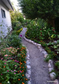 Our garden path on the side yard in August 2014