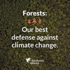 Forests - our best defence against climate change. .