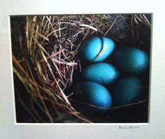 Bruce Barone's fine art photography is stunning!  I am captivated by the detail in this photo of a robin's eggs in a nest.  Plus, the blue is my favorite.  Let's welcome Bruce as a new exhibitor to #hpmkt.  Bruce Barone Photography (Market Square G-30B, ADC)