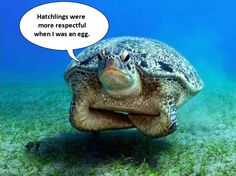 cute turtle laughing | From Buzzfeed via imageshack.us