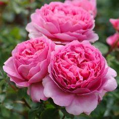 Resultado de imagen de rose alexandra of kent