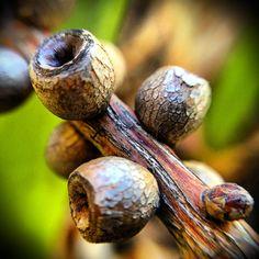 Garden treasures seed pods