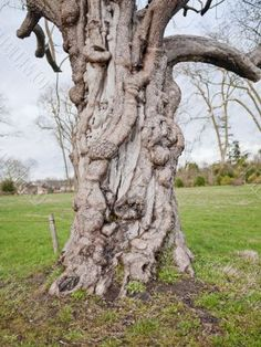 mangled tree - Google Search