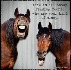 Life is all about finding people who are your kind of crazy! ValleyVet.com