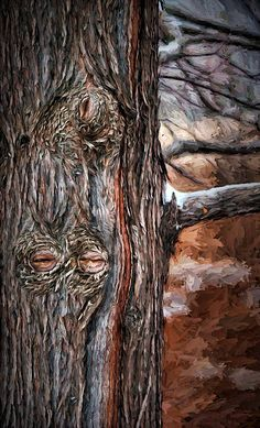 """Watcher In The Woods""by Nikolyn McDonald is a whimsical and somewhat eerie close-up of a tree trunk with knothole eyes.  Seeing an image, especially something animate and in this case the almost closed eyes of a face, in something else is known as ""pareidolia"".   chiaroscuro,nature,branch,bark,browns,dark,spooky,gothic,nature,natural,pair,narrowed,peer,peering,sinister,spooky,whimsy,moody,dark mood,personification,nikki,nikolyn,mcdonald"