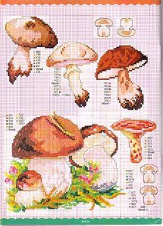Gallery.ru / Фото #1 - грибы - irisha-ira