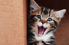 31 Facts You Never Knew About Cats