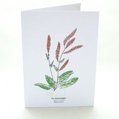 Kräuterwanderung | Wegesrandkraeuterkarte Sauerampfer | greeting card with wild herbs | common sorrel | STUDIOKARAMELO