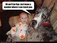 BLUE MERLE GREAT DANE...and they are the best babysitters in the world