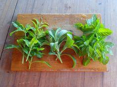 Green leaves tea - Verbena, Stevia and Lemon Balm