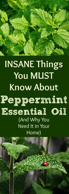 14 INSANE Things You MUST Know About Peppermint Essential Oil (And Why You Need it in Your Home!)