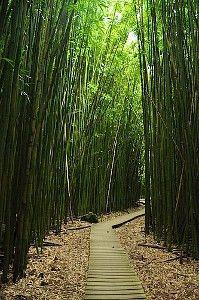 I loved this trail, the bamboo is sooo strong. one of my favorite sites in Maui