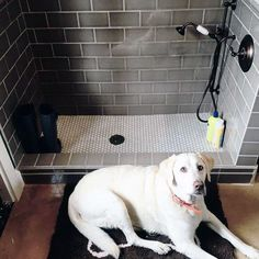 (paid link) How To Build A Dog Bathing Station. #dogbathingstation Pet Washing Station, Dog Station, Dog Bathing Station, Metal Dog Kennel, Dog Bathroom, Dog Cleaning, Dog Shower, Shower Door, Dog Rooms