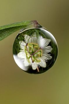 Trapped Flower