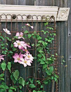 18 Wall Trellis Ideas for a Gorgeous Display of Flowering Vines Arbors Trellis, Garden Trellis, Trellis Ideas, Wire Trellis, Herbs Garden, Garden Gate, Fruit Garden, Flowers Garden, Vegetable Garden