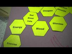 A video explaining the Hexagon Challenge! in Science - #SOLOTaxonomy - YouTube