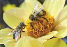 Comment attirer les abeilles - 1 - Installer les bonnes plantes