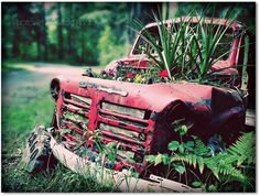 Going Green  8x10 Fine Art Photo Print by SingingPhotographer #gabriolaisland #truck #fathersdaygift