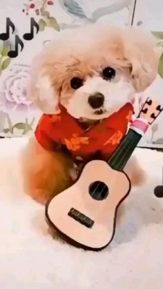 Cute Baby Dogs, Cute Funny Dogs, Cute Dogs And Puppies, Cute Funny Animals, Cute Baby Animals, Cute Babies, Baby Animals Pictures, Funny Animal Pictures, Puppy Finder