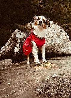 Take your best friend along for all your adventures, no matter the weather with the Dog Raincoat that's lightweight, wind and water resistant and features an adjustable neck and waist for comfort.