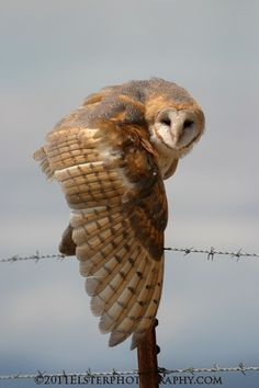 I love owls and this shot is incredible!