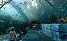 Un aquarium souterrain... à Paris
